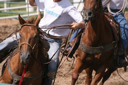Ranch team roping competition
