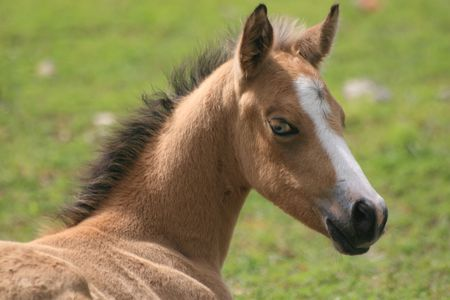Young foal with a glass eye Stok Fotoğraf