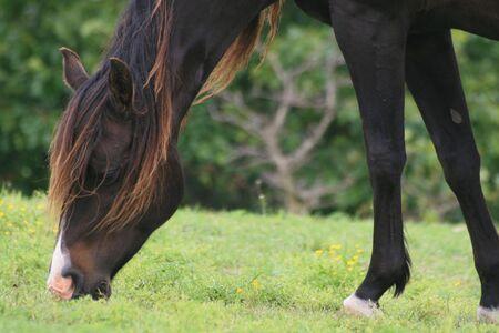 Beautiful maned broodmare Stock Photo - 4919781