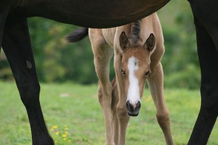 brown  eyed: Young blue & brown eyed foal