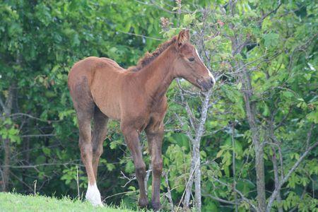 Foal near a wooded area