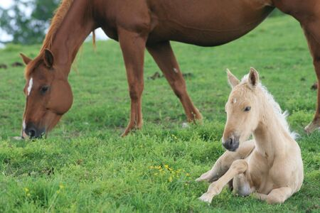 Broodmare and foal