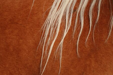 The mane and skin of a horse