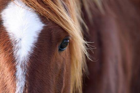 Quarter horses mane kissed by sun rays