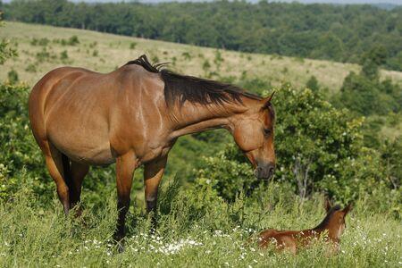 Mare and foal Reklamní fotografie