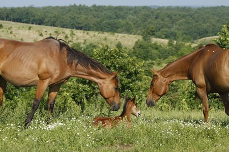 Cooing over a new foal photo