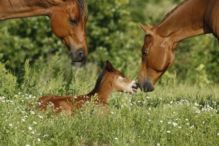 Visiting mare nosing around a young foal
