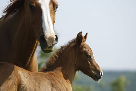 Foal and flashy face mare