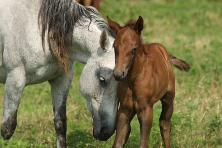 Mom nuzzling her young foal