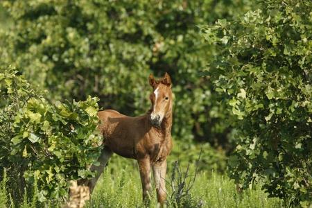 poised: Poised foal