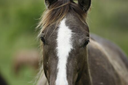 filly: Gorgeous young filly Stock Photo