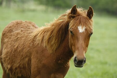 Stunning young horse