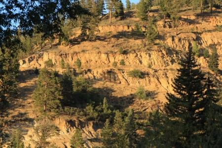 mountainside: Forest mountainside erosion