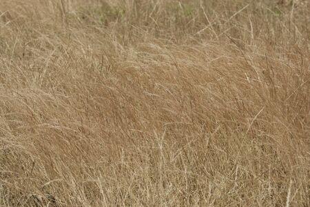 текстуры: Высокие травы
