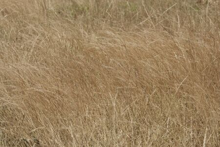 dry grass: Tall grasses