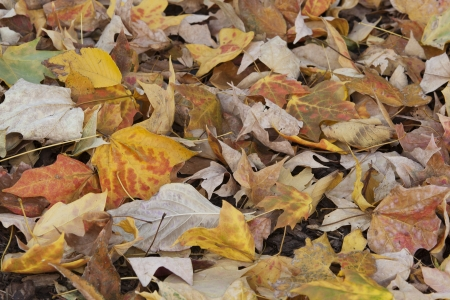Leaf droppings Stock Photo - 16137615