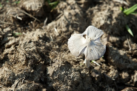 dung: Mushroom in a horse pasture