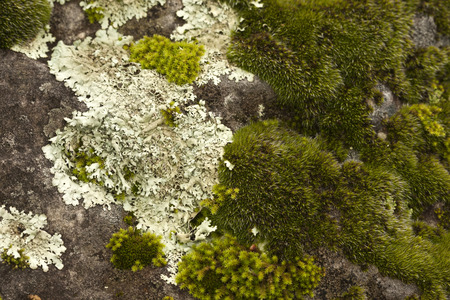 Mosses growing on rocks