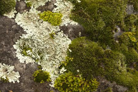 mosses: Mosses growing on rocks