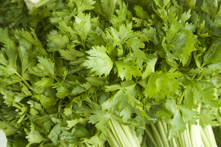 Fresh out of the garden celery Banque d'images
