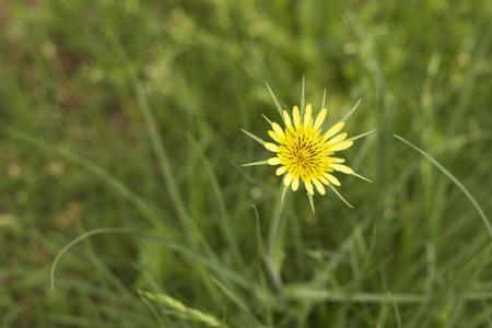 Bright yellow wildflower