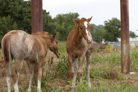 reacting: Two foals reacting to each other