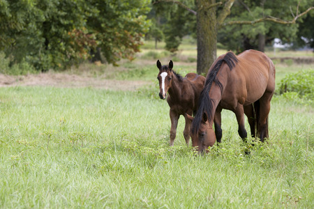 Broodmare and young foal