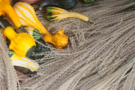 Autumn squashes and dried grasses Stock Photo