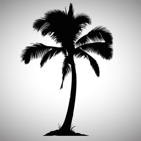 arboles blanco y negro: Palmera aislada