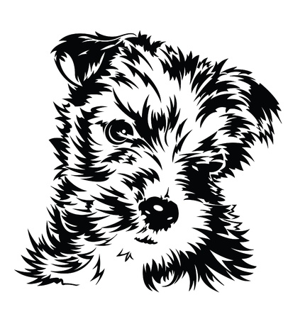 terriers: Puppy