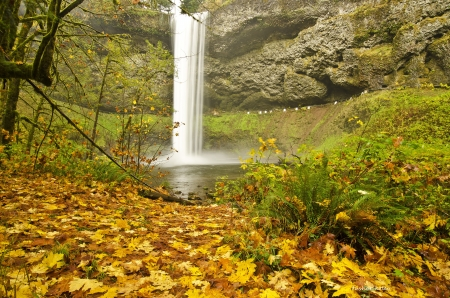 Silver Falls Sate Park at Fall Color Stock Photo - 20295287