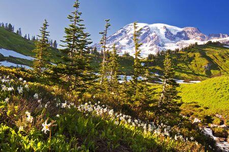 MOUNT RAINIER: A forest in mount rainier