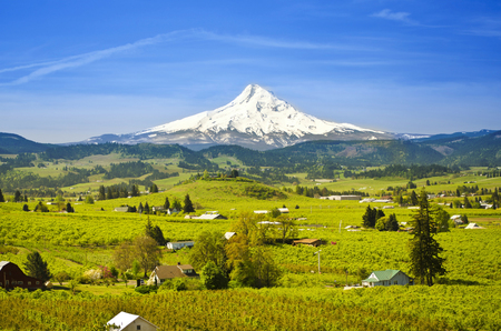 mt  hood national forest: Hood River Valley Stock Photo