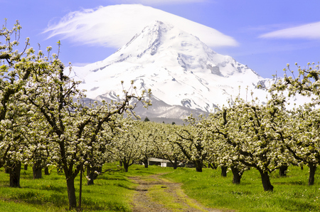 mount hood national forest: Mt Hood from  Hood River Stock Photo