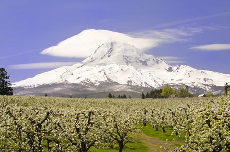 oregon cascades: Mt Hood from  Hood River Stock Photo