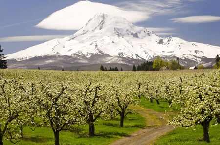 Mt Hood from Orchid Garden at Hood River
