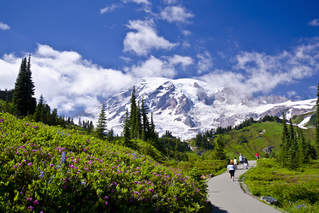 oregon cascades: Mt Rainier from a Trail