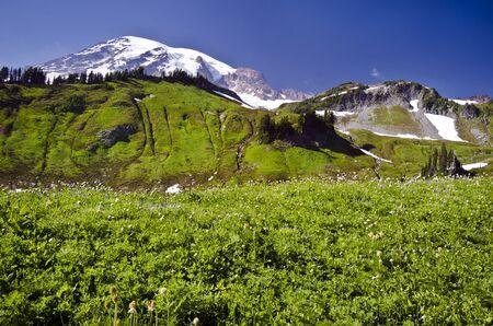 mt rainier: Mt Rainier from a Trail
