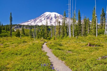Mt Rainier with beautiful wild flowers at the foreground Stock Photo