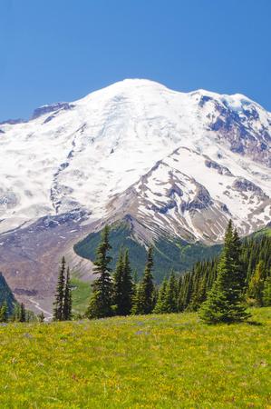 Mt Rainier met prachtige wilde bloemen op de voorgrond Stockfoto
