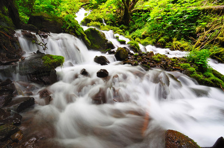 A unknown falls in the way of fairy falls