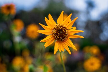 Sunflower with blurred bokeh background Imagens - 132156813