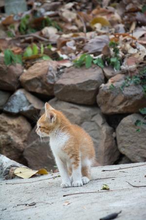 housecat: Funny baby cat