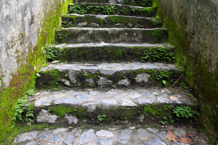 wet cobbled road and a wall with moss