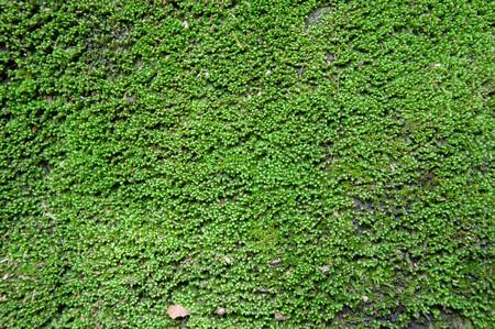 trama di sfondo verde muschio bella in natura
