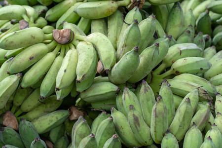 raw cultivated banana and ripe cultivated banana for sale