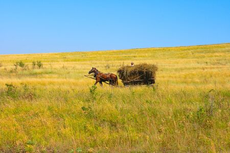 Carriage harness by horses carry hay grass photo