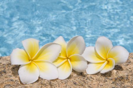 Tropical flowers on a stone against blue water. photo