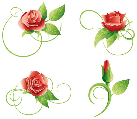 twining: Four roses on a white background. Vector illustration.