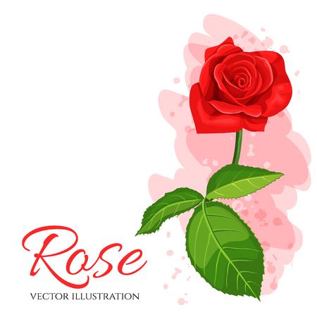 Red rose flower vector illustration isolated on white background.
